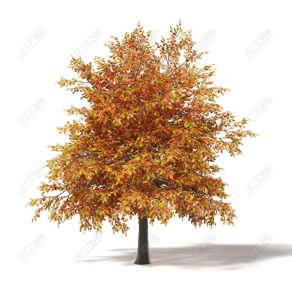 C4D秋季落叶橡木树模型下载