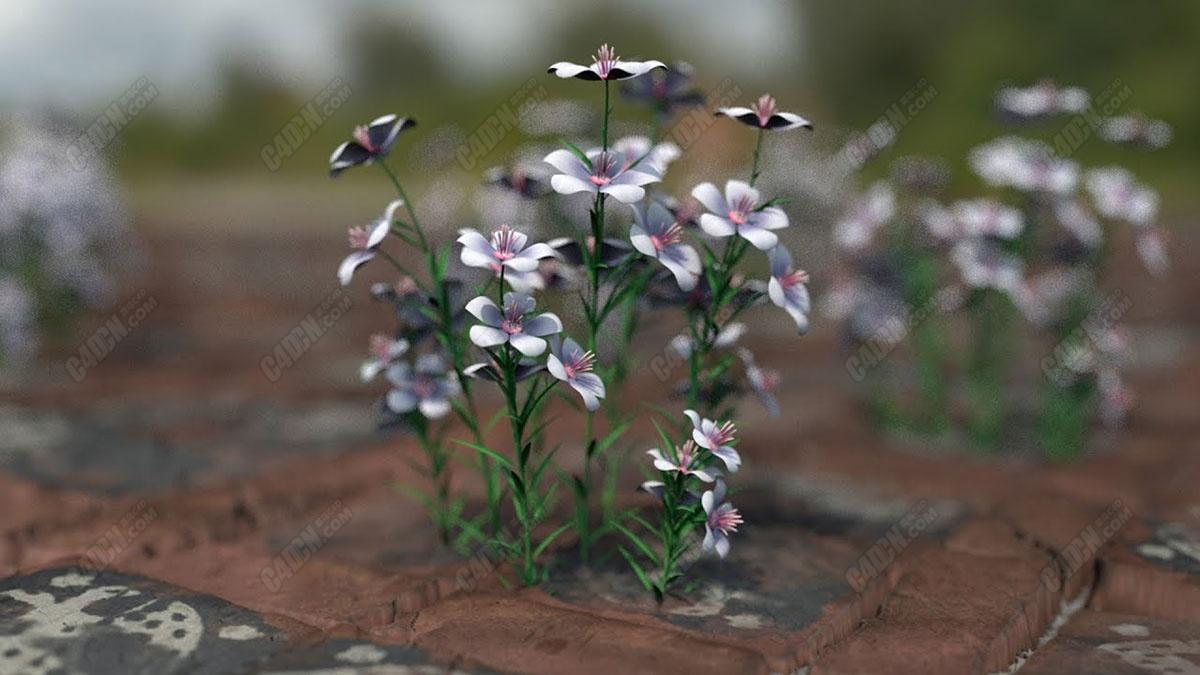 C4D+Octane Render渲染器创建野外花朵材质教程