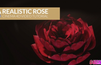 C4D教程 建模和骨骼绑定制作逼真的红红玫瑰模型材质渲染教程 Cinema 4D Video Tutorial Realistic Rose