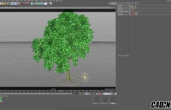 C4D毛发模块制作动力学树教程