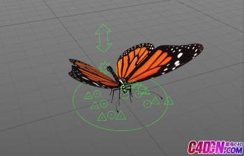 C4D+Max+maya+蝴蝶模型+材质+骨骼绑定+可直接做动画