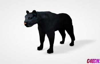 C4D动物模型黑豹