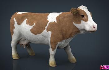 C4D模型 精品写实奶牛家畜动物3D模型 COW
