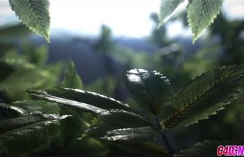 Arnold阿诺德渲染器植物森林树叶特写逼真材质渲染C4D教程