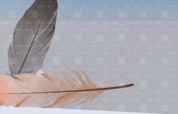 C4D教程 风力场吹落透明通道贴图羽毛飘落动画教程