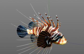 狮子鱼C4D模型 lionfish