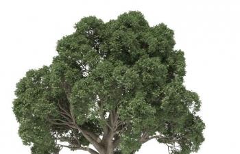 森林植物生成插件中文汉化版 - Forester for Cinema 4D R18