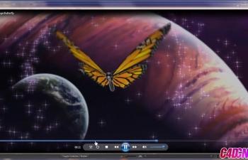 C4D教程 蝴蝶绑定动画制作AE合成翅膀煽动粒子飞舞效果教程