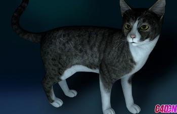 一只蛮真实的小猫渲染