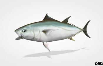 C4D自动鱼动画绑定脚本预设