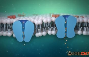 C4D+AE制作医学细胞膜离子通道教程