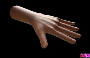 C4D教程 人体手部器官建模雕刻材质教程 Cinema 4d Hand