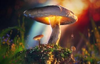 C4D教程-使用Octane渲染器制作真实的森林野生植物蘑菇教学