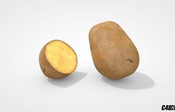 C4D蔬菜模型 土豆 马铃薯