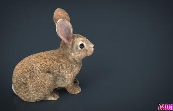 C4D模型 兔子家兔写实动物3D模型 RABBIT