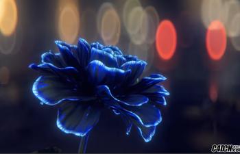 C4D教程:无限盛开的花朵