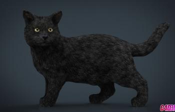 C4D模型 写实精品黑猫猫咪动物模型