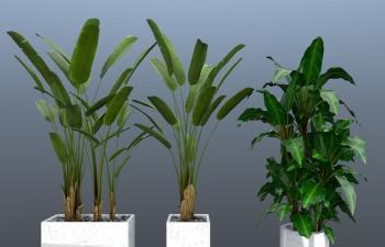 绿植(带材质工程文件)