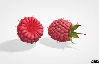 C4D模型 野生浆果 水果模型 Wild Berries