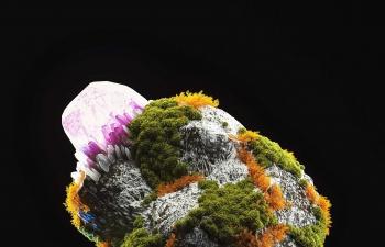 花草叶石头模型