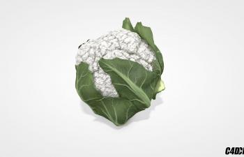 C4D蔬菜模型 花菜 菜花