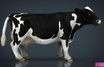 C4D模型 黑背白斑奶牛动物3D模型 Milk Cow