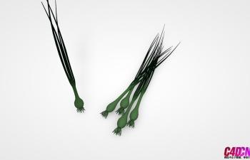 C4D模型 葱苗 蔬菜模型