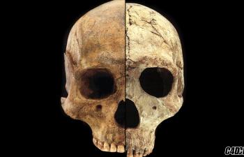 20款 人类头骨 参考图素材