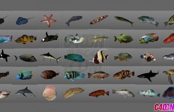 40组海洋生物动物鱼类C4D模型含绑定含动画工程文件