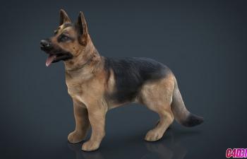 C4D模型 德国黑背宠物狗动物3D模型 German shepherd
