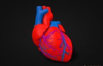 医用心脏模型