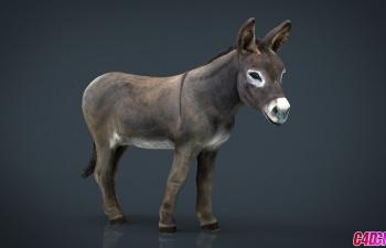 C4D模型 农业家畜毛驴子动物3D模型下载 Donkey