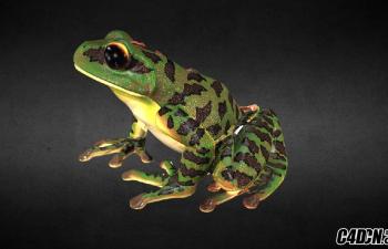 C4D解剖学青蛙动物模型 Anatomy Frog