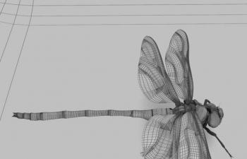 30 个高细节昆虫模型