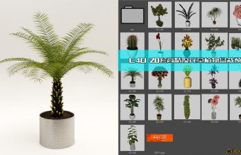 C4D预设 20套高精度花草植物盆栽预设
